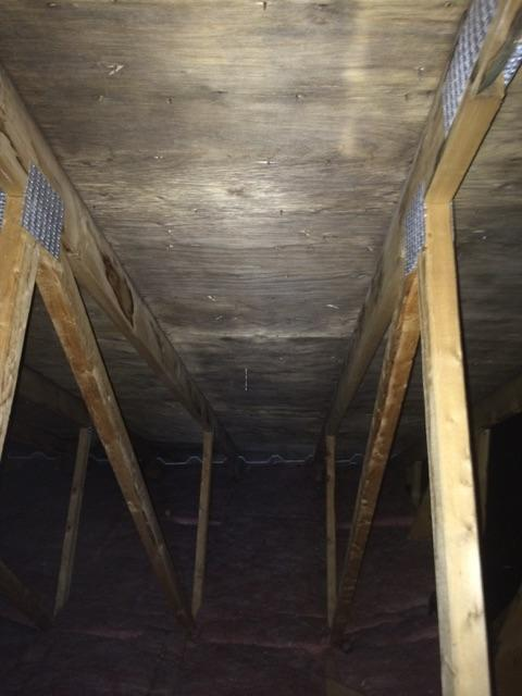 Attic mold removal montreal